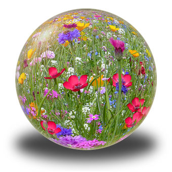 Ball, Flower Meadow, Summer, Spring, Inflorescence