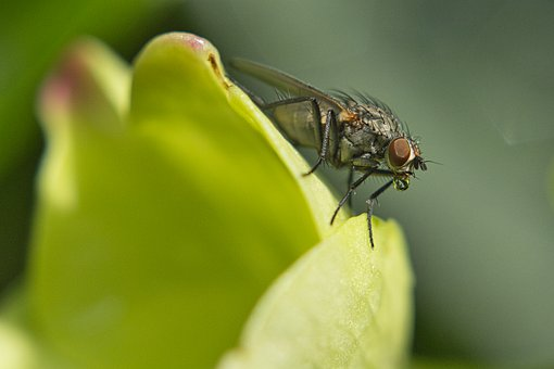 Fly, Leaf, Drip, Flying, Insect, Leaves