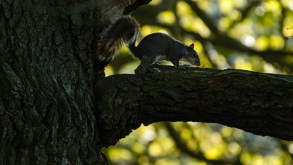 Squirrel, Chipmunk, Branch, Tree, Fauna, Nature