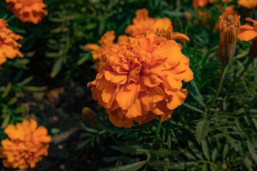 Flower, Plant, Bloom, Beautiful, Garden, Blossom