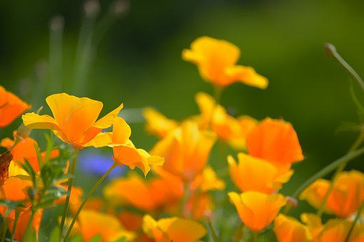 Flowers, Petals, Buds, Garden, Field, Bloom, Meadow