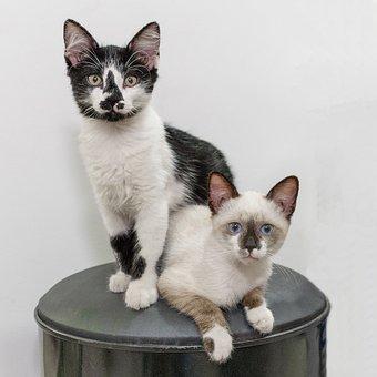 Cat, Feline, Kitten, Pet, Domestic, Fur, Whiskers