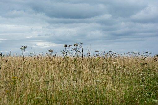 Field, Sky, Meadow, Flowers, Clouds, Wild Flowers