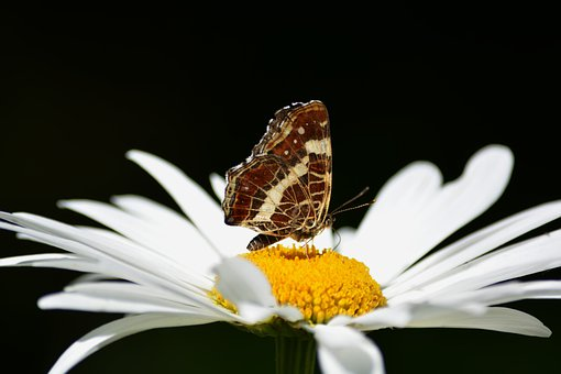 Flower, Petals, Butterfly, Wings, Nature, Antennas