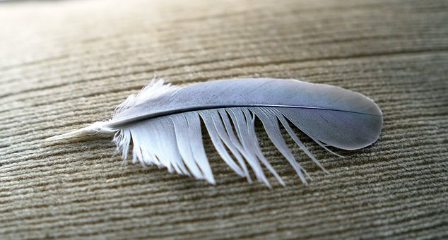 Feather, Wing, Bird, Nature, Freedom, Fly, Wings, Dove