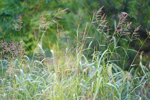 Flower Meadow, Field, Grass, Garden, Nature, Green
