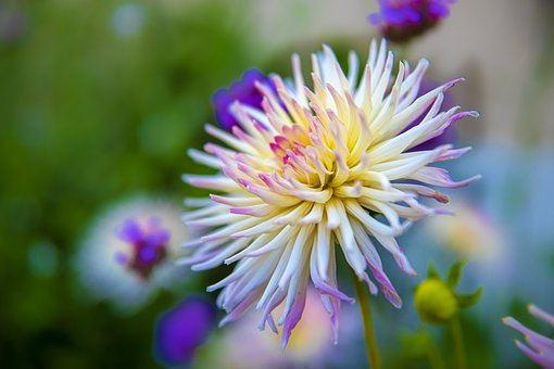 Flower, Plants, Petals, Chrysanthemum, Nature, Garden
