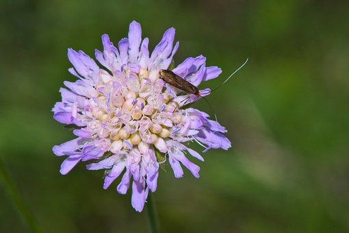 Wildflowers, Purple Flower, Herb