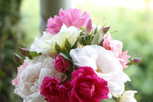 Rose, Bouquet, Flowers, Nature, Blossom, Romance