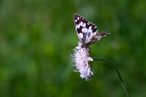 Butterfly, Wildflowers, Insect