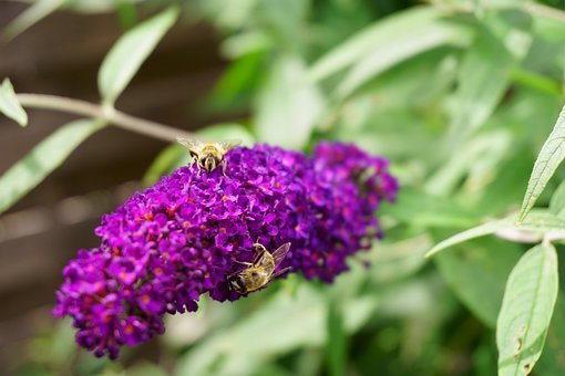 Bees, Leaf, Flowers, Plant, Insect, Flora, Bugs, Wings