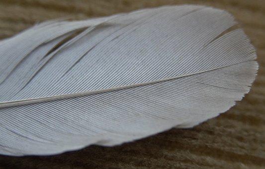 Feather, Macro, Close Up, Avian, Structure, Color, Bird
