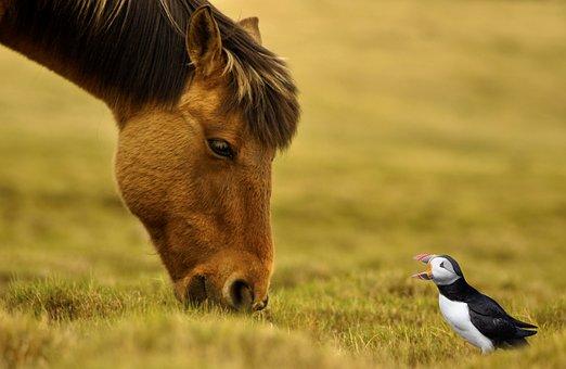 Pony, Bird, Graze, Wilderness, Animal World, Reported