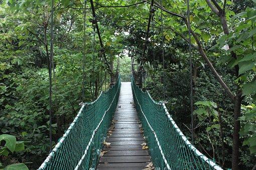 Bridge, Jungle, Nature, Forest, Green, Travel