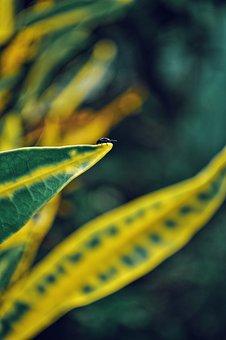Leaf, Foliage, Bug, Beetle, Insect, Plant, Nature