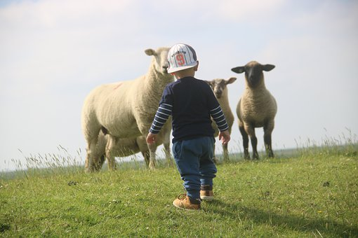Children, Sheep, Friedrichskoog, North Sea, Dam, Coast