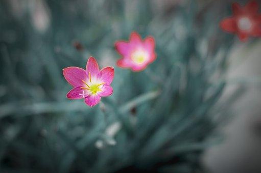 Flowers, Petals, Plants, Dainty, Delicate, Grass