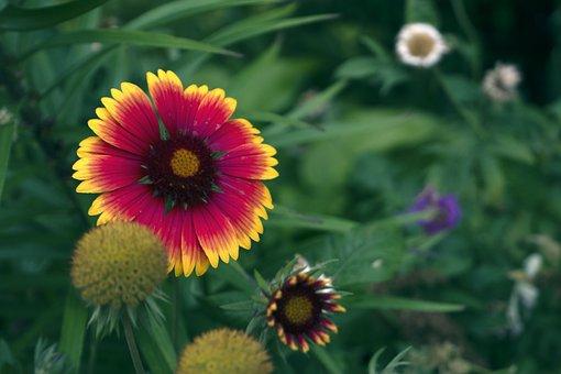 Flower, Plants, Petals, Garden, Grass