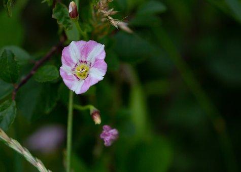 Flower, Petals, Buds, Plants, Leaves