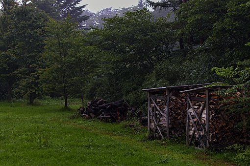 Forest, Field, Trees, Wood Stack, Logs, Firewood