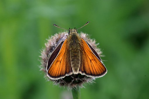 Butterfly, Insect, Bug, Leaves, Foliage, Grass, Nature