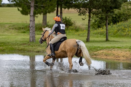Horse, Man, Galloping, Gallop, Water, Obstacle, Riding
