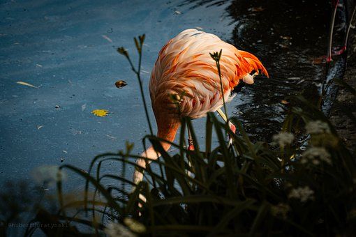 Flamingo, Bird, Pink, Zoo, Animal, Feather, Nature
