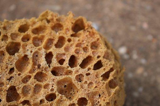 Sponge, Sea, Life, Porifera, Water, Underwater, Coral