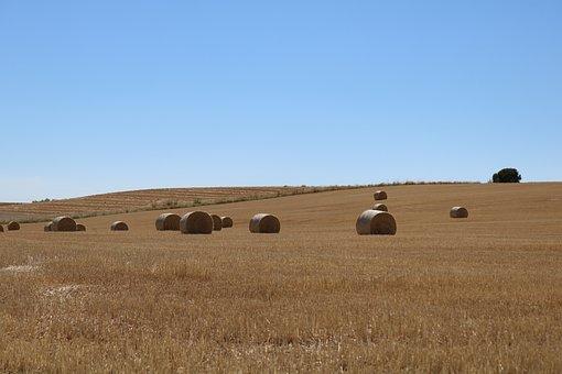 Bread, Heat, Earth, Field, Wheat, Brown, Sky, Straw
