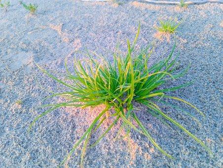 Sand, Grass, Beach, Landscape, Nature, Coast, Lake, Sea
