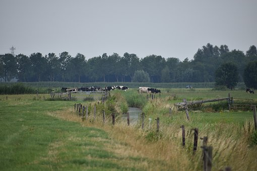 Pasture, Cow, Netherlands, Holland, Landscape, Meadow