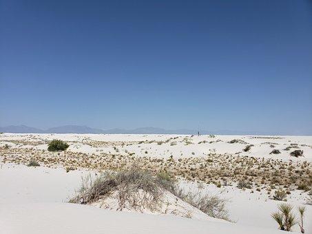 Desert, White Sand, Weeds, Plants