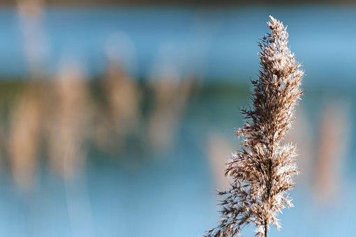 Plants, Reeds, Grass, Nature, Bokeh, Environment