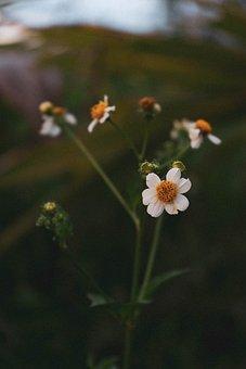 Flowers, Nature, Summer, Garden, Spring, Bloom, Plant