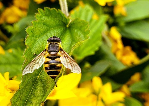 Bee, Wasp, Insect, Bug, Wings, Leaves, Foliage, Flowers