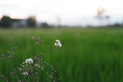 Flowers, Field, Nature, Summer, Garden, Spring, Bloom