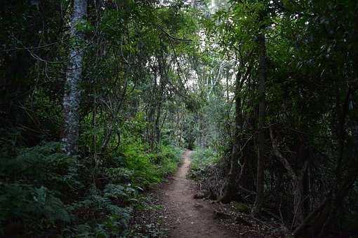 Forest, Trees, Leaves, Foliage, Trail, Path, Pathway