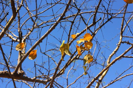 Fall, Tree, Leaf, Autumn, Leaves, Woods, Nature