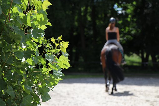 Horse, Woman, Equine, Animal, Nature, Riding, Leaves