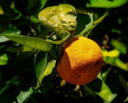 Orange, Leaf, Bush, Leaves, Nature, Texture, Colorful