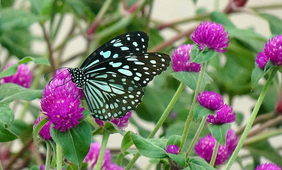 Butterfly, Insect, Bug, Wings, Antenna, Flower, Petals