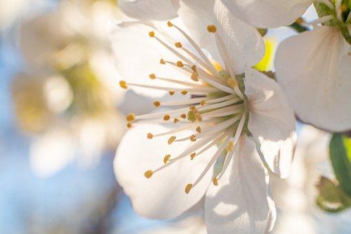 Flower, Petals, Tree, Flourishing, Spring, Decorative