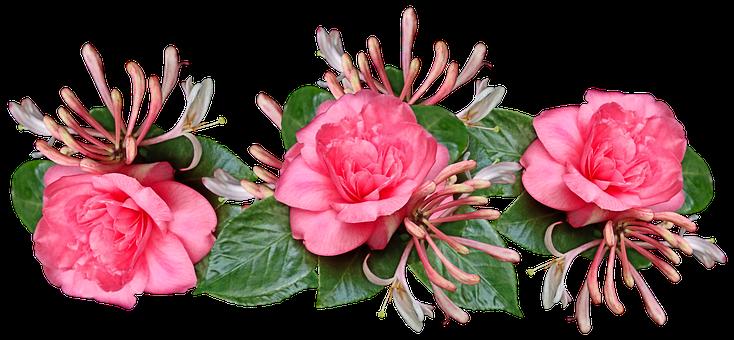 Flowers, Camellias, Petalas, Leaves, Pink, Honeysuckle