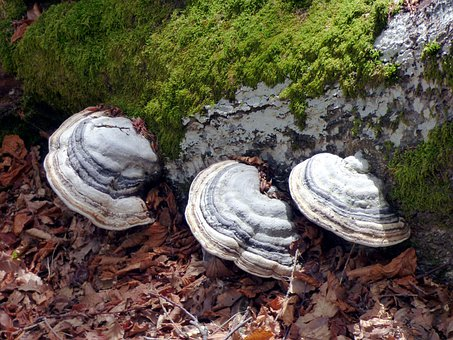 Mushrooms, Fungi, Forest, Mountain, Wet, Light, Foam