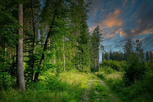 Forest Path, Glade, Forest, Lane, Hiking