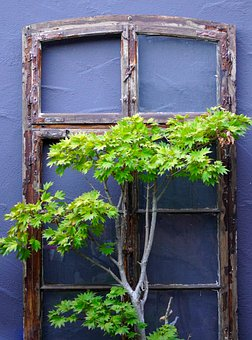 Window, Frame, Trees, Leaves, Plants, Wall, Decoration