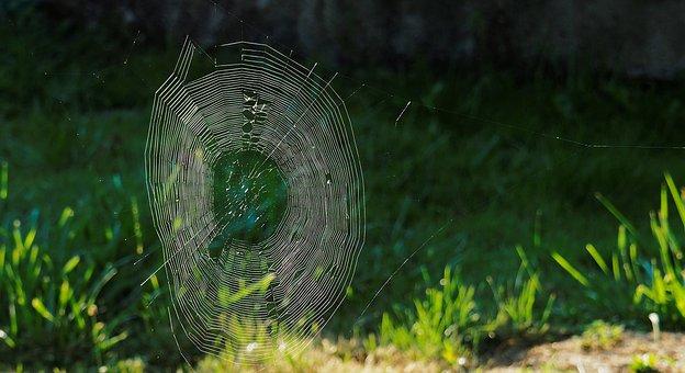 Spider, Web, Spiderweb, Insect, Garden, Grass, Cobweb