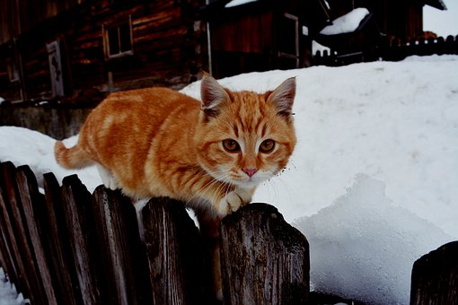Kitten, Feline, Animal, Cute, Snow, Fence, Kitty, Fur
