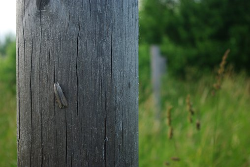 Tree, Board, Nature, Grass, Post, Old, Vintage