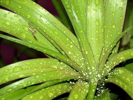 Plant, Ponytail Plant, Nature, Green, Bug, Leaves